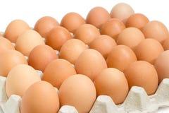 Uova di Brown nel primo piano del vassoio dell'uovo Immagine Stock