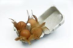 Uova di Brown in scatola delle uova con le piume Fotografie Stock Libere da Diritti