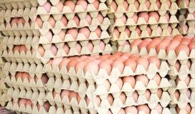 Uova di Brown in scatole Fotografie Stock