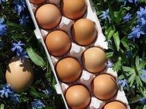 Uova di Brown sulla lastra di vetro rossa e sul legno stagionato Fotografia Stock Libera da Diritti