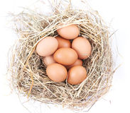 Uova di Brown in un nido su una priorità bassa bianca Immagini Stock