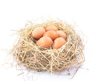 Uova di Brown in un nido su una priorità bassa bianca Fotografie Stock Libere da Diritti