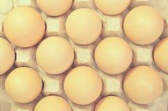 Uova di Brown in un vassoio del cartone per le uova Immagine Stock Libera da Diritti