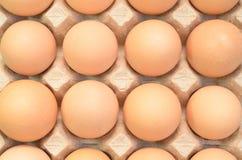 Uova di Brown in un vassoio del cartone per le uova Fotografia Stock Libera da Diritti