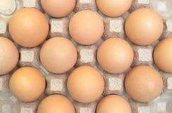 Uova di Brown in un vassoio del cartone per le uova Immagini Stock Libere da Diritti