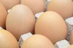 Uova di Brown in un vassoio del cartone per le uova Immagine Stock