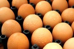 Uova di Brown in una scatola delle uova Immagine Stock