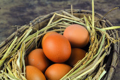 Uova di Brown in uova di gallina del nido Immagini Stock Libere da Diritti