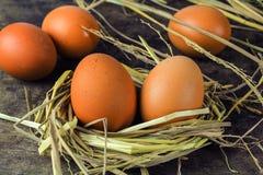 Uova di Brown in uova di gallina del nido Immagini Stock