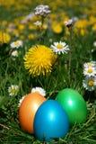 Uova di caccia di Pasqua in prato Immagine Stock