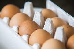 Uova di Chiken imballate in una scatola Immagini Stock