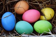 Uova di colori sul nido immagini stock libere da diritti