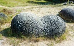 Uova di dinosauro calcificate immagini stock libere da diritti