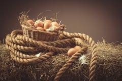 Uova di galline immagine stock