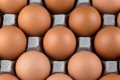 Uova di galline fresche in vassoio dell'uovo del cartone Fotografia Stock