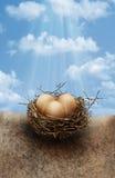 Uova di nido Immagini Stock