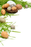Uova di Pasqua fotografia stock libera da diritti