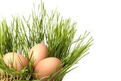 Uova di Pasqua. Immagini Stock Libere da Diritti