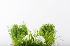 Uova di Pasqua bianche nell'erba Fotografie Stock Libere da Diritti