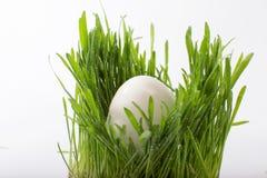 Uova di Pasqua bianche nell'erba Immagine Stock