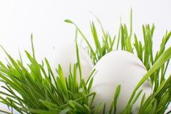 Uova di Pasqua bianche nell'erba Fotografia Stock Libera da Diritti
