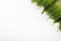 Uova di Pasqua bianche nell'erba Fotografia Stock