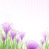 Uova di Pasqua con i croco rosa Fotografia Stock Libera da Diritti