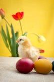 Uova di Pasqua con il pollo giallo sveglio Immagini Stock