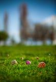 Caccia dell'uovo di Pasqua Su un campo Immagini Stock