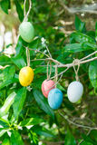 Uova di Pasqua decorative variopinte che appendono sul ramo di albero, foglie verdi Immagini Stock