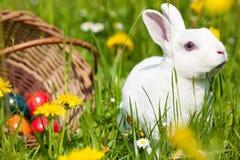 uova di Pasqua del coniglietto del cestino fotografia stock
