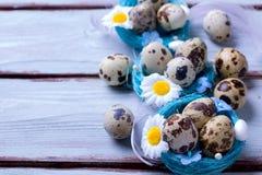 Uova di Pasqua della quaglia Fotografia Stock Libera da Diritti