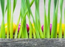 Uova di Pasqua dietro erba Immagine Stock