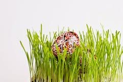 Uova di Pasqua dipinte in erba verde fresca Fotografia Stock