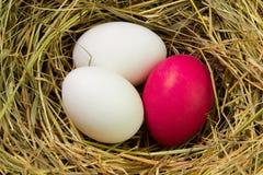 Uova di Pasqua dipinte nella paglia Fotografie Stock