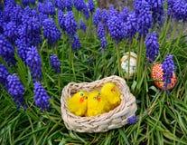 Uova di Pasqua dipinte variopinte e piccolo pollo su un'erba verde Fotografie Stock