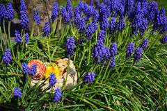 Uova di Pasqua dipinte variopinte su un canestro su un'erba verde Fotografia Stock