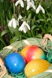 Uova di Pasqua e bucaneve Fotografia Stock Libera da Diritti