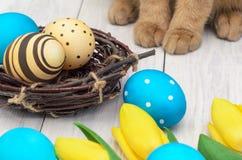 Uova di Pasqua e coniglio Immagini Stock Libere da Diritti
