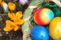 Uova di Pasqua e croco Immagine Stock