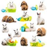 Uova di Pasqua e dei conigli in un canestro Fotografia Stock Libera da Diritti