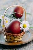 Uova di Pasqua e fiore della margherita Immagini Stock Libere da Diritti