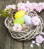 Uova di Pasqua e fiore di sakura Fotografia Stock Libera da Diritti
