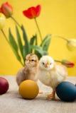 Uova di Pasqua e piccolo pollo sveglio Immagini Stock