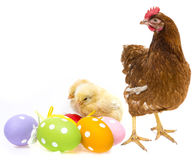 Uova di Pasqua e polli Con una gallina Fotografia Stock Libera da Diritti