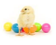 Uova di Pasqua E pollo del bambino fotografie stock