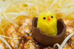 Uova di Pasqua e pulcini Immagine Stock