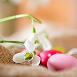 Uova di Pasqua E snowdrops Fotografie Stock Libere da Diritti