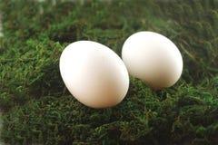 Uova di Pasqua In erba Fotografia Stock Libera da Diritti