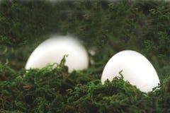 Uova di Pasqua In erba Fotografie Stock Libere da Diritti